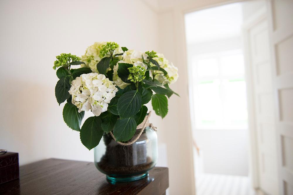 house plants, Interior styling, Wimbledon Interior Designer, Nikkirees.com